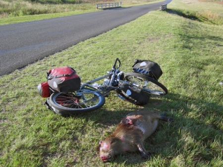 The age old story: Nature-loving biker vs. whatever the fuck that thing is.