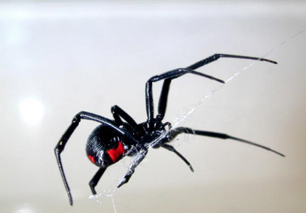 Signs that you are suffering from a black widow bite: 1. You have been asked to make significant changes to your will...