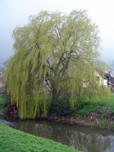 "The over-dramatic Weeping Willow prepares to hurl itself into the river, quoting ""Hamlet"" all the while..."